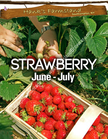 Pick Your Own Strawberries at Hank's Pumpkin Farm and ...