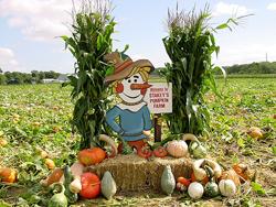 Pumpkin patch long island nassau