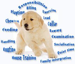 Therapy Dog Training Classes Long Island Ny