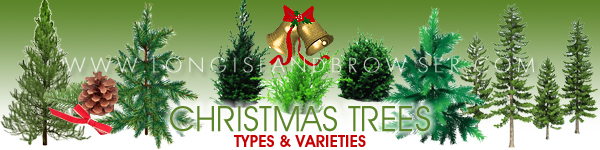 Long Island Holiday Christmas Tree Types Varieties - Cedars Cypresses Firs Pines Spruces