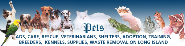 Long Island Pets Browser Pets Dogs Cats Birds Reptiles Nassau Suffolk Long Island New York