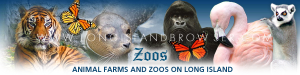 Zoos and Animal Farms on Long Island, New York