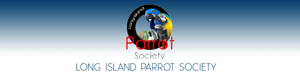 Parrot Rescue Long Island New York