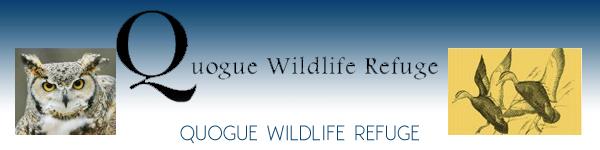 Quogue Wildlife Refuge - Nature Preservce Environmental Center - Quogue Long Island New York