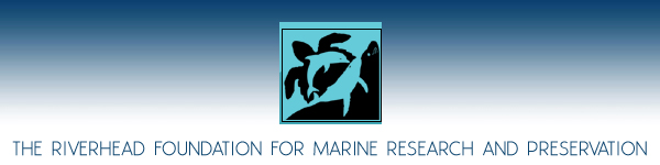 Riverhead Foundation For Marine Research and Preservation - Nature Environment - Long Island New York