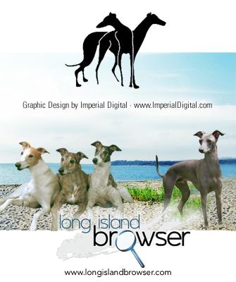 Greyhound Dog Rescue Long Island