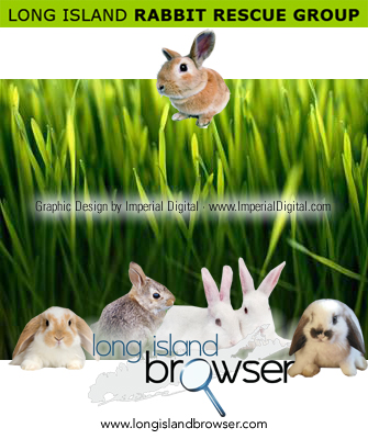 Long Island Rabbit Rescue Group (LIRRG) - Long Island, New York