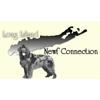 Long Island Newfoundland Connection - Long Island, New York